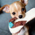 Zbiórka karmy dla psów ikotów